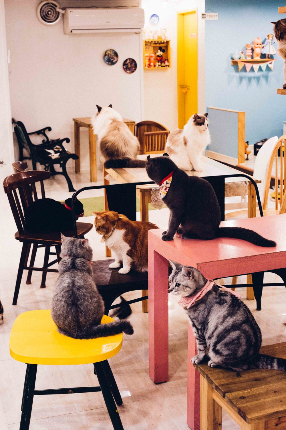 The cat cafe in Seoul
