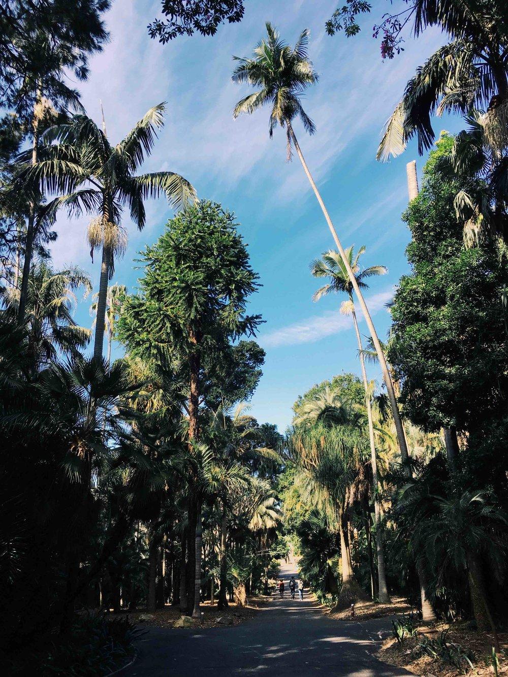 The beautiful pathways of Sydney Botanic Gardens with palm trees. Photo: Marine Raynard