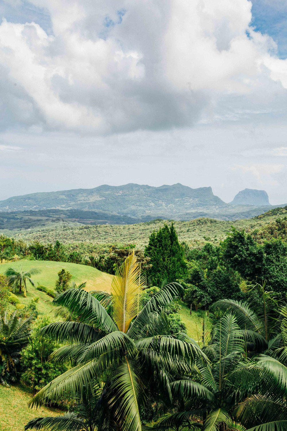 Beautiful lush green in Mauritius