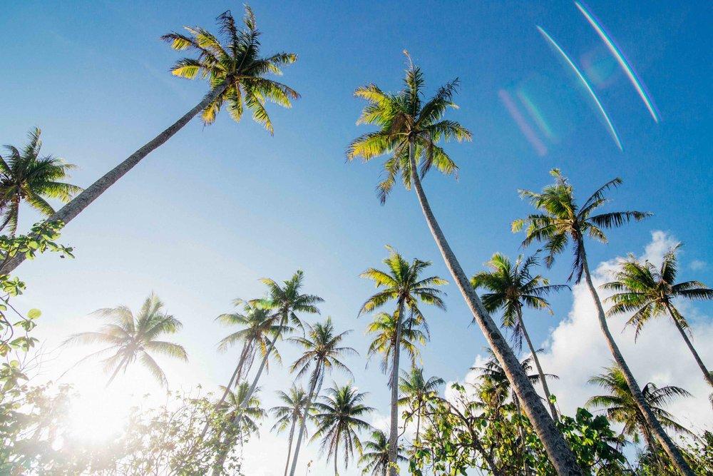 huahine_palmtrees.jpg