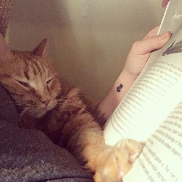 My reading buddy last night . . . . . #bookstagram #bookblogger #bookish #bibliophile #booknerd #booklover #books #bookaddict #reading #instabook #bookaholic #instabooks #catsofinstagram #cat