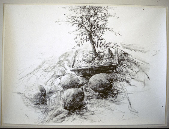 Four Quinces with Bonsai, 1997, pastel & charcoal on Whatman 100% rag paper, 56 x 75 cm