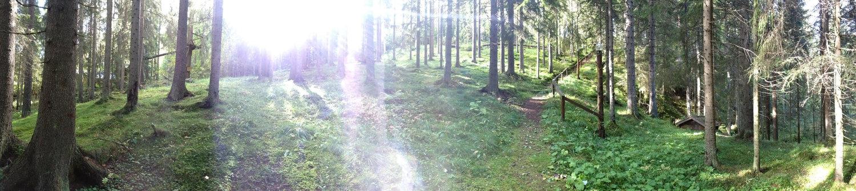 Forrest light.jpg