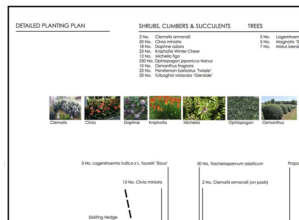 A planting plan in Rippon Lea, Melbourne designed remotely from Spotswood, Melbourne.
