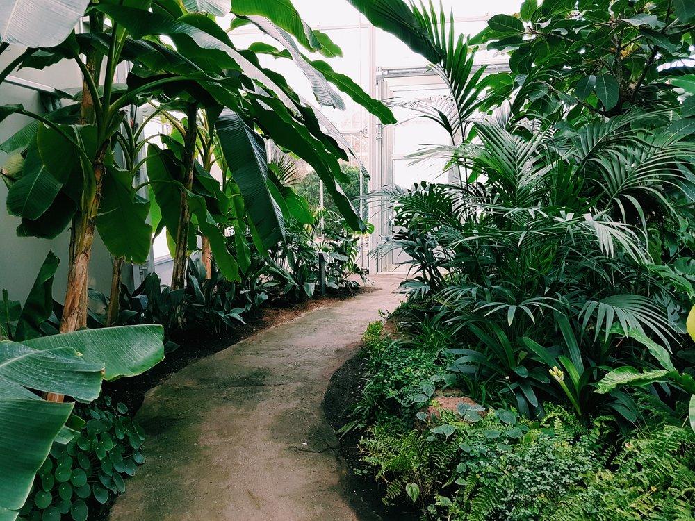 daylight-environment-garden-1055408.jpg