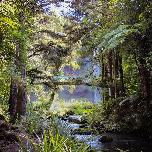 Whangaerei Falls - New Zealand
