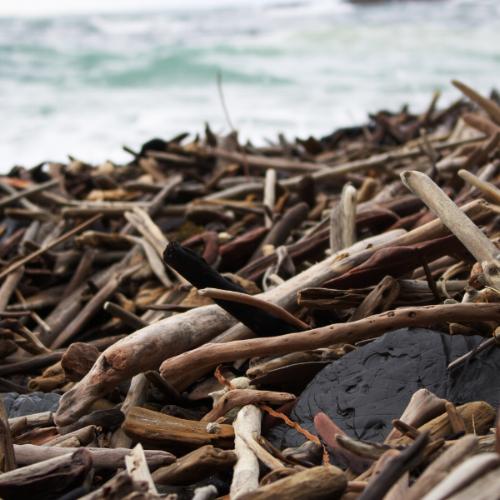Drift Wood Kohi Point - New Zealand