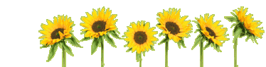 sunflower-header.png