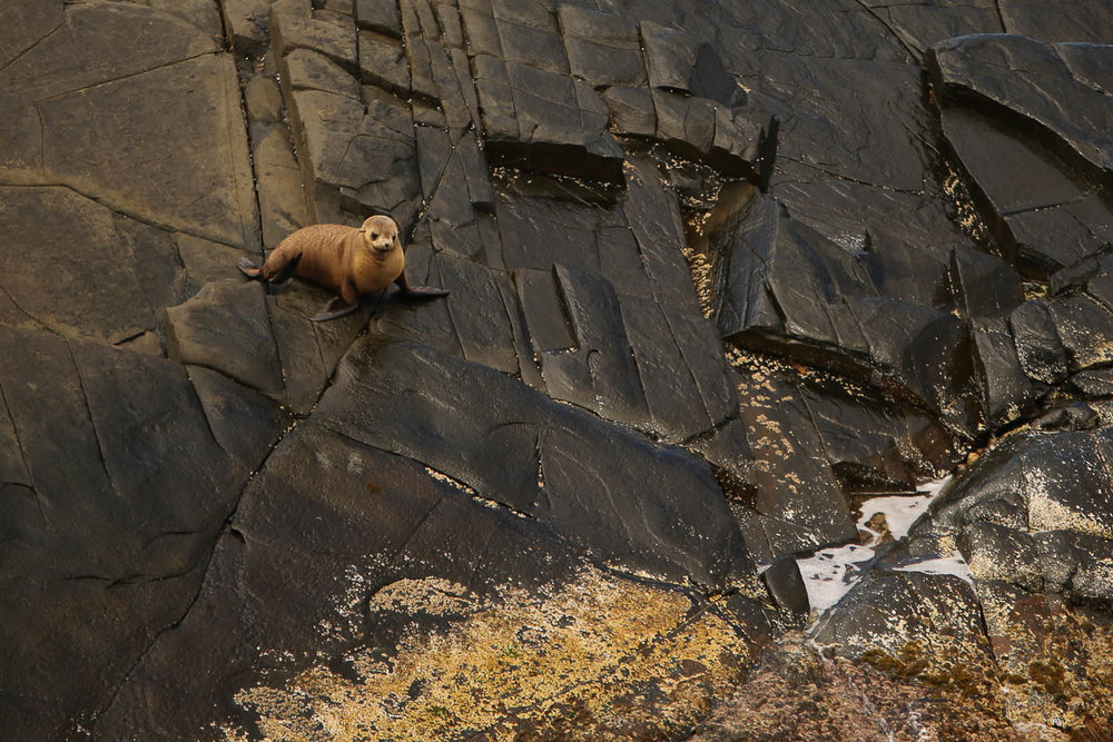 The fur seals are fun to watch, but just hope the wind is coming from behind you! -
