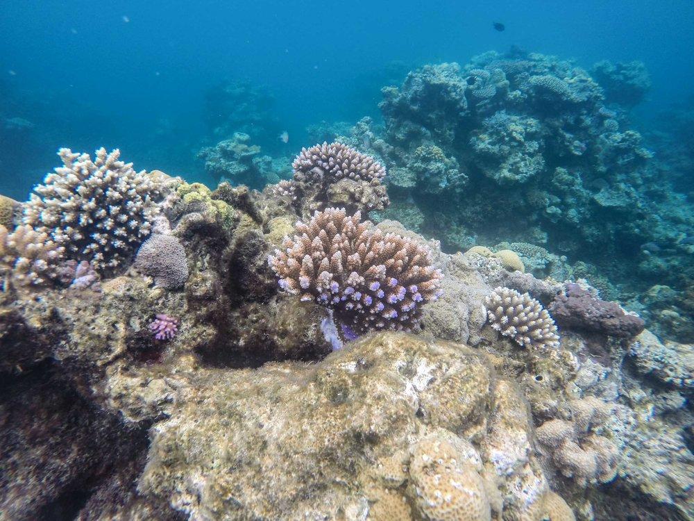 Reef Snorkeling, Vanuatu (5 of 8).jpg