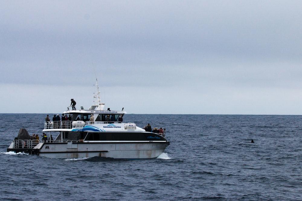 Naturaliste Charters' vessel