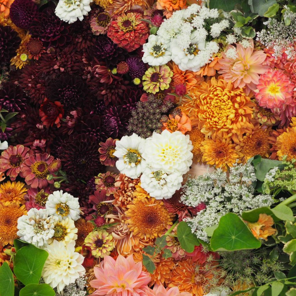 Flowers, Autumn gardening