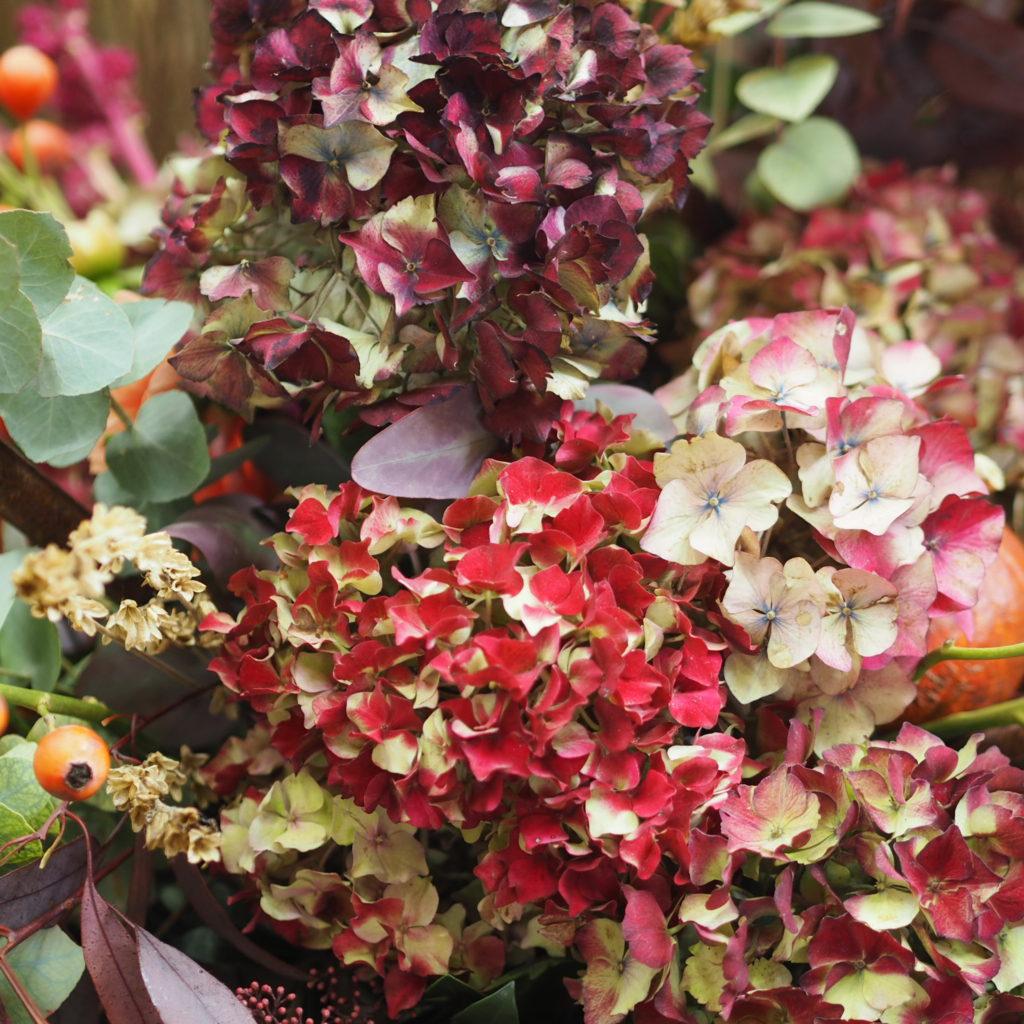 Autumn flowers, RHS