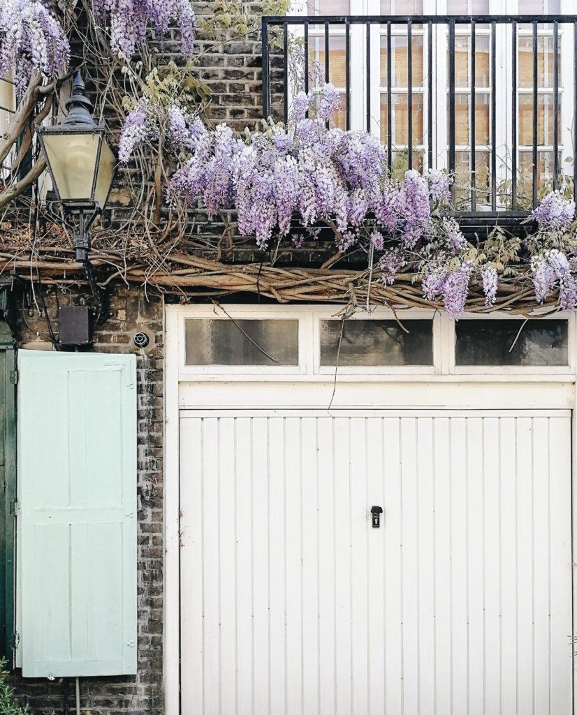 Wistereia wanders, visit London, Spring in London, London