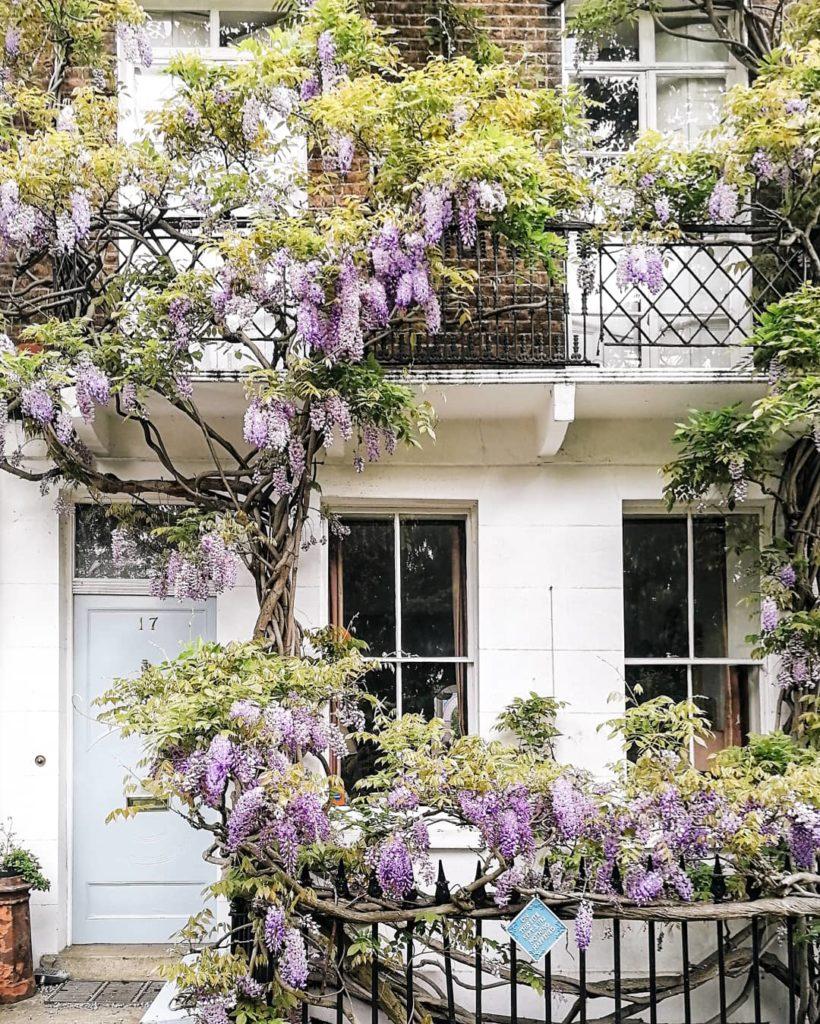 Wisteria, Bram Stoker London