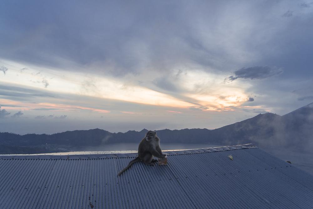 Mount Batur Sunrise Hike (6 of 37).jpg