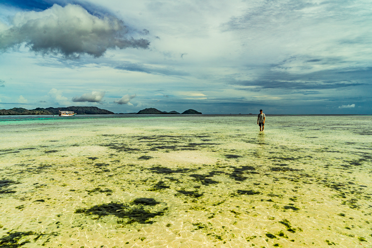Komodo Dragon - Flores Island (42 of 96).jpg