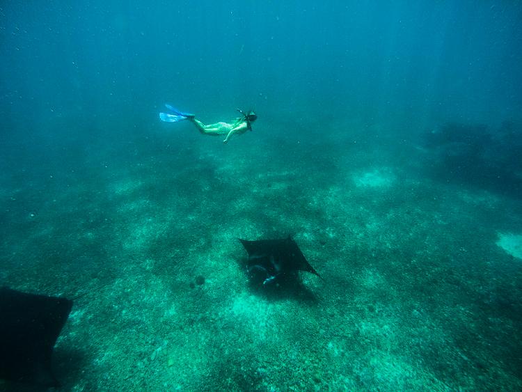 Swimming with Manta RaysSwimming with Manta Rays