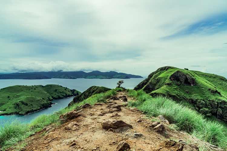 Komodo Dragon - Flores Island (79 of 96).jpg