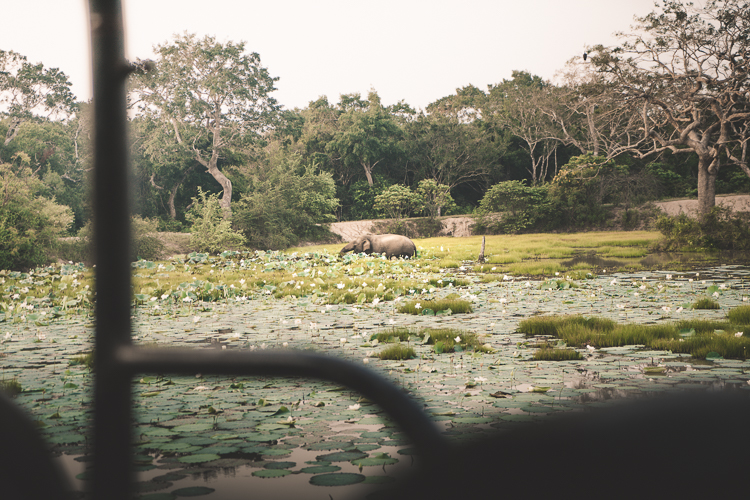 Elephant Eating and Bathing