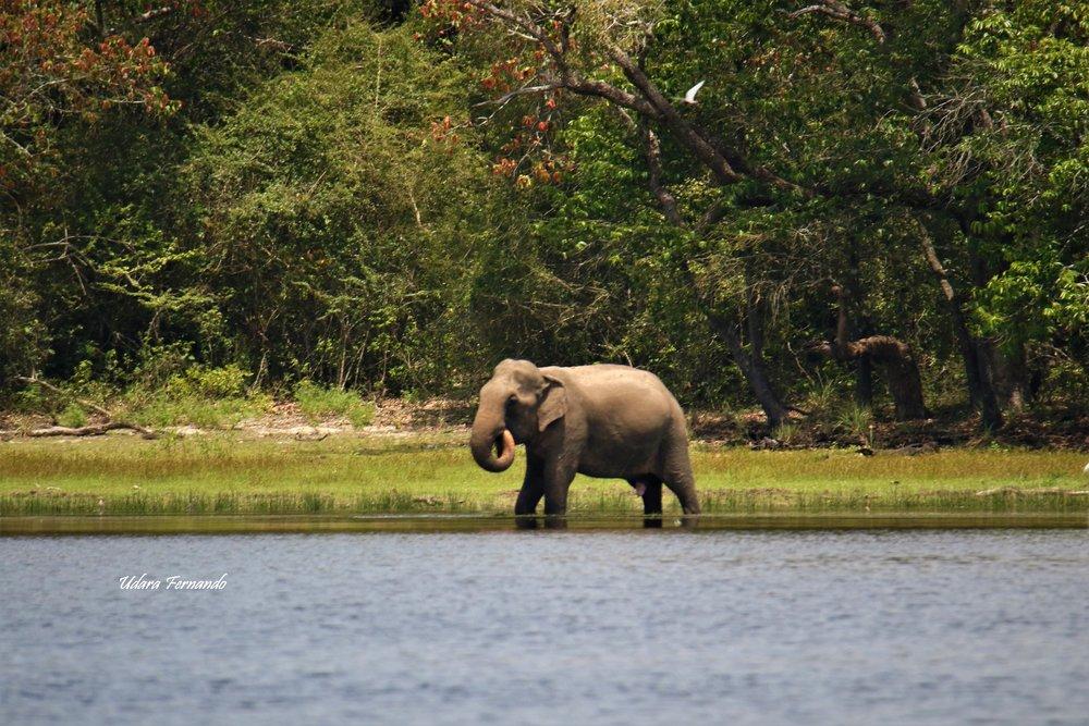 Elephant by Instagram: adho7