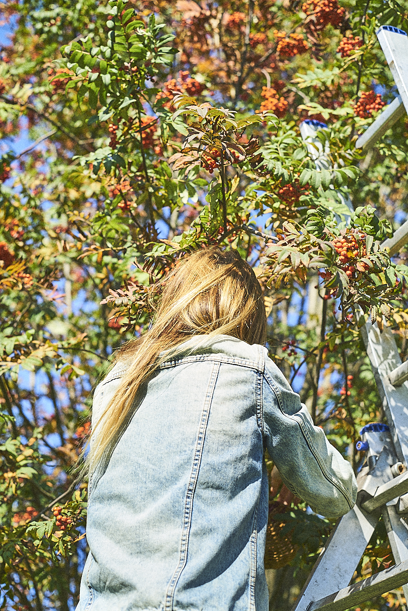 rowanberry harvest_24092017_SAF_SM_SM 4.jpg