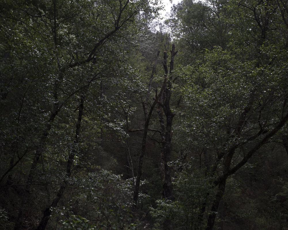 trees 2.jpg