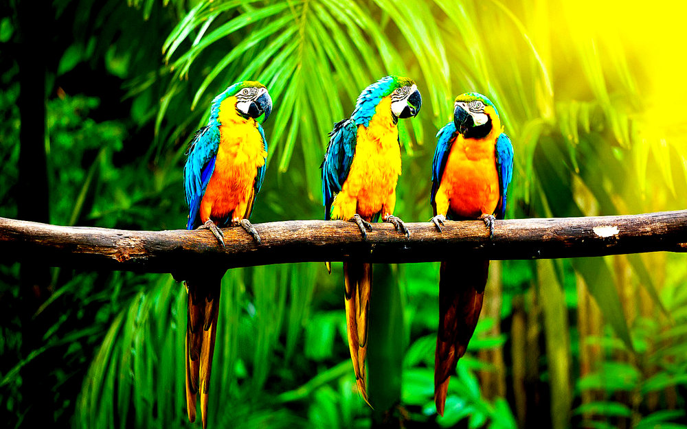Birds of the Rain Forest