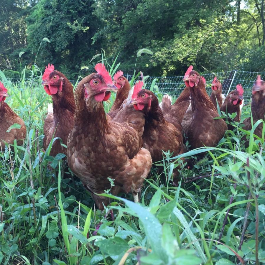 copicut farms -