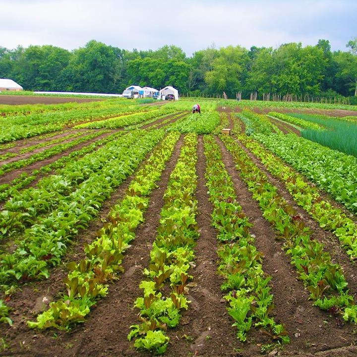 Flats mentor farm -