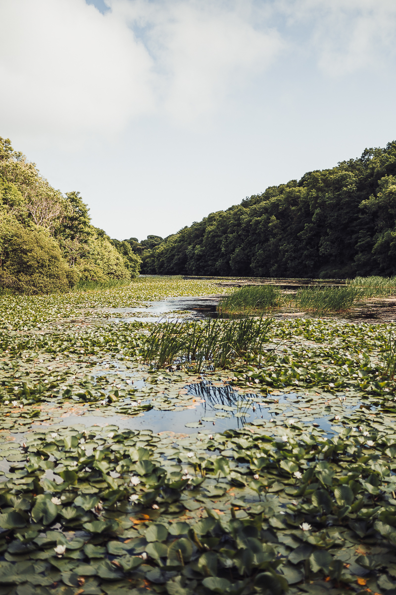 Superfex_BlogPost_Pembrokeshire_Wales_Bosherston_Lily_Ponds_3.jpg