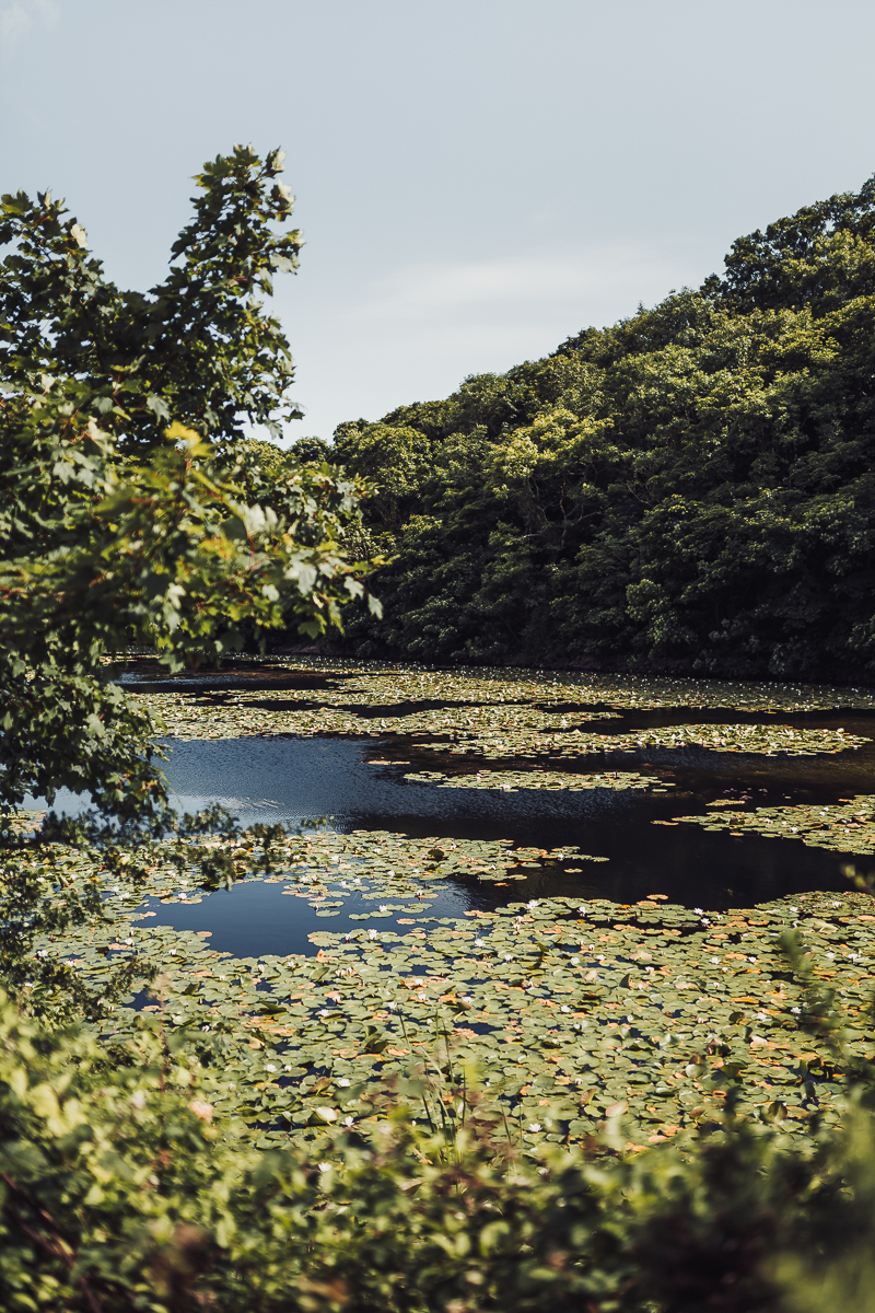 Superfex_BlogPost_Pembrokeshire_Wales_Bosherston_Lily_Ponds_9.jpg