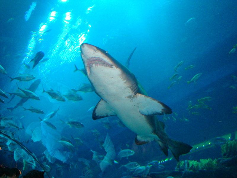 1 Dubai_Aquarium