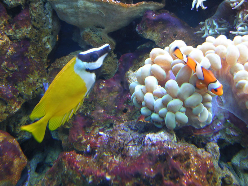 5 submarino Seoul_Aquarium.jpg