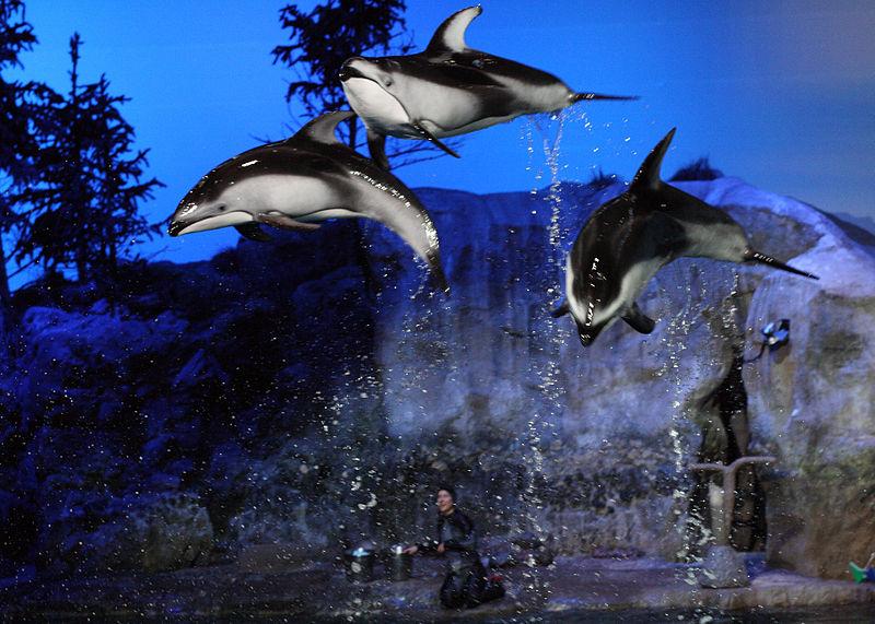 8 last Chicago_Aquarium.JPG