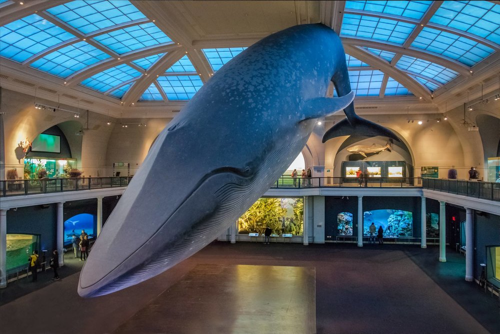 Visit American Museum of Natural History with eTips Visitor Guide