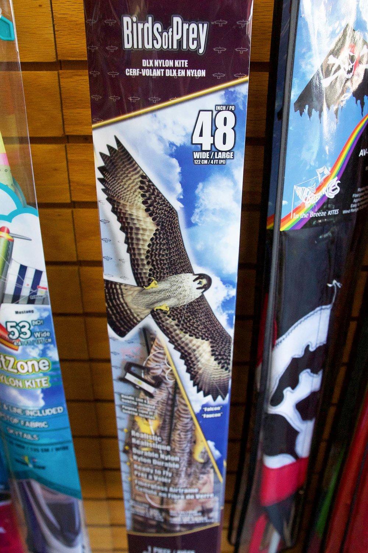 Birds of Prey Kite.jpg