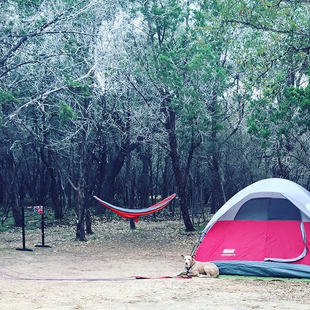Furry friends and yard games are some of the extras you can bring along when car camping. Beginners can learn more about the different types of camping by clicking the link in our bio. #camping #carcamping #pedernalesfallsstatepark #pedernalesfalls #campingwithdogs #texasstateparks #campingforbeginners #weekendwarriors