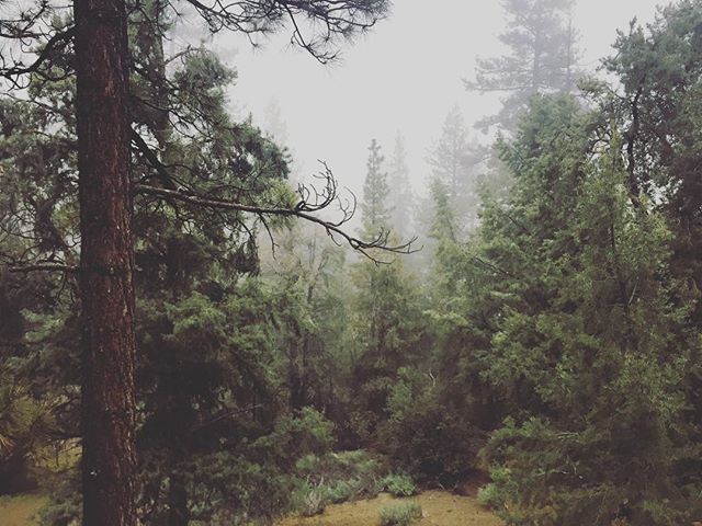 Tacked on a micro-adventure to the end of my work trip and visited Los Padres National Forest over the weekend. The fog rolling in was both creepy and magical. #lospadres #lospadresnationalforest #getoutside #microadventure #fog