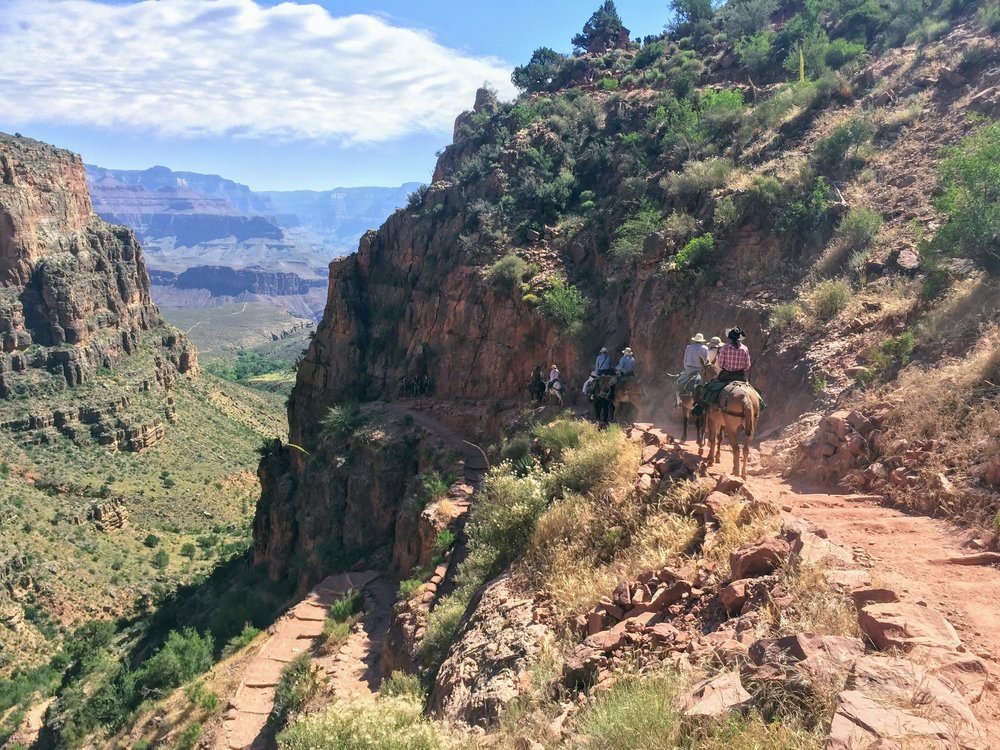 Day 3: Mules headed down the Bright Angel trail into the canyon.