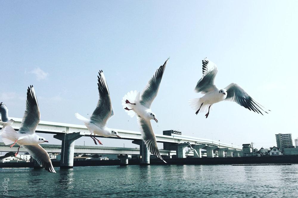 JAPAN.005.jpg