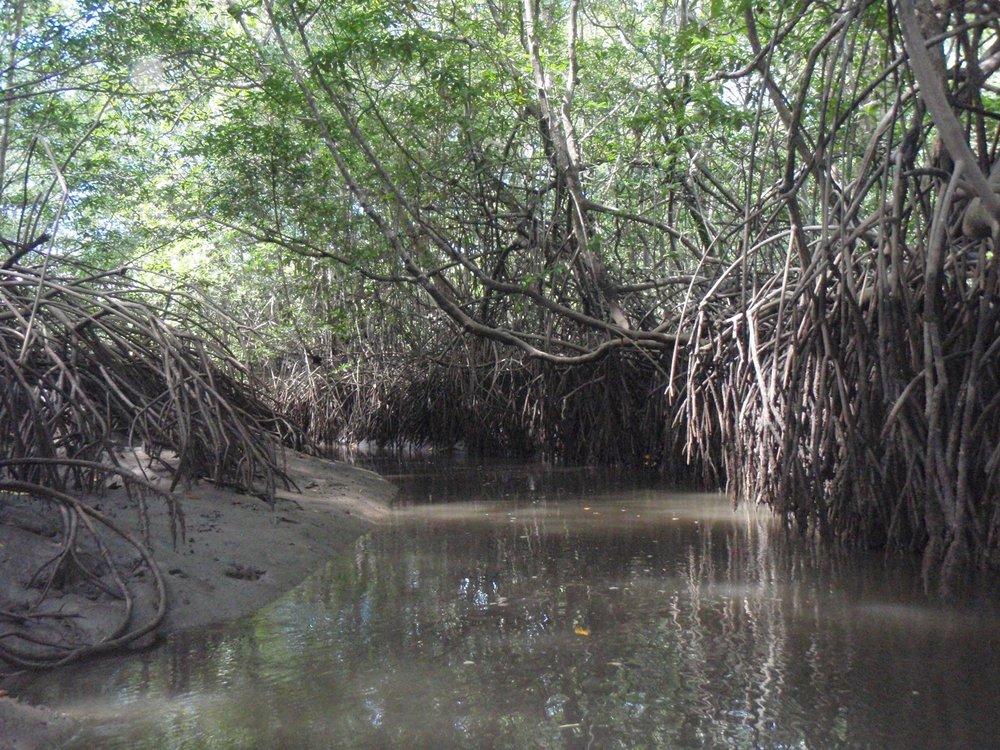 Costa Rica Mangrove.jpg