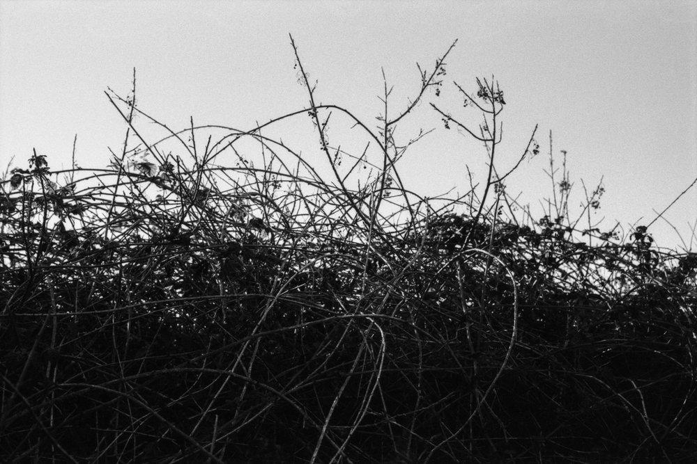 Between 12 Weeds.jpg