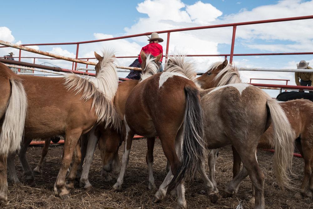 Hardisty 4 Horses.jpg