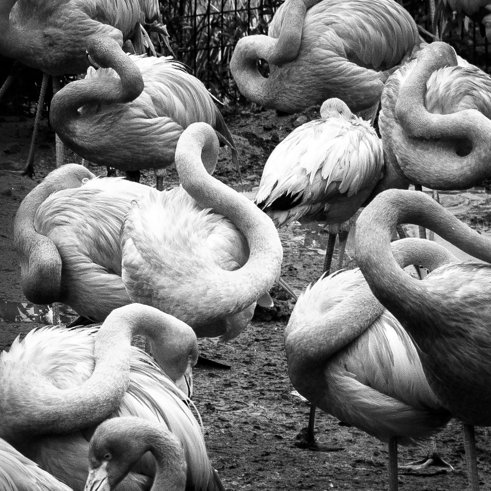 Animals-1.jpg