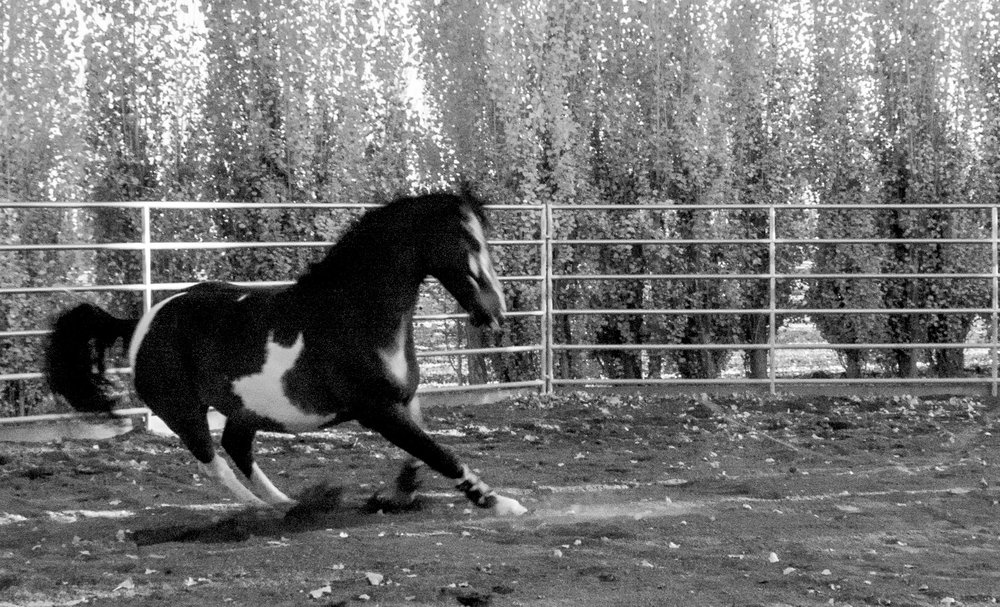 Horses (1 of 2).jpg