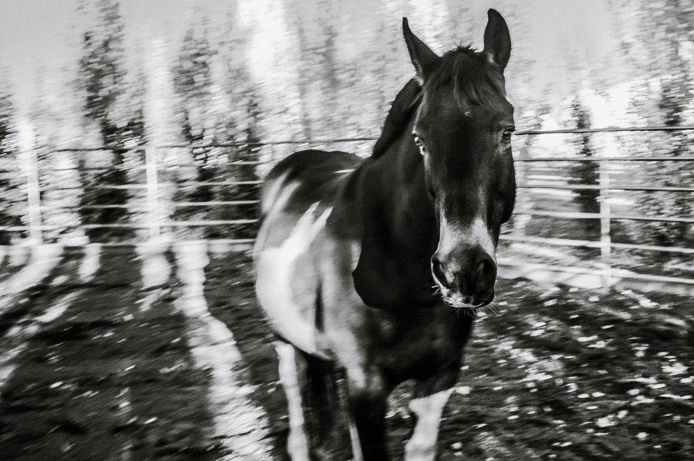 Horses (2 of 2).jpg