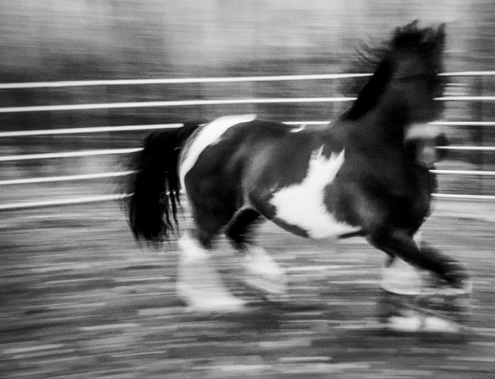 IR Horse-1.jpg