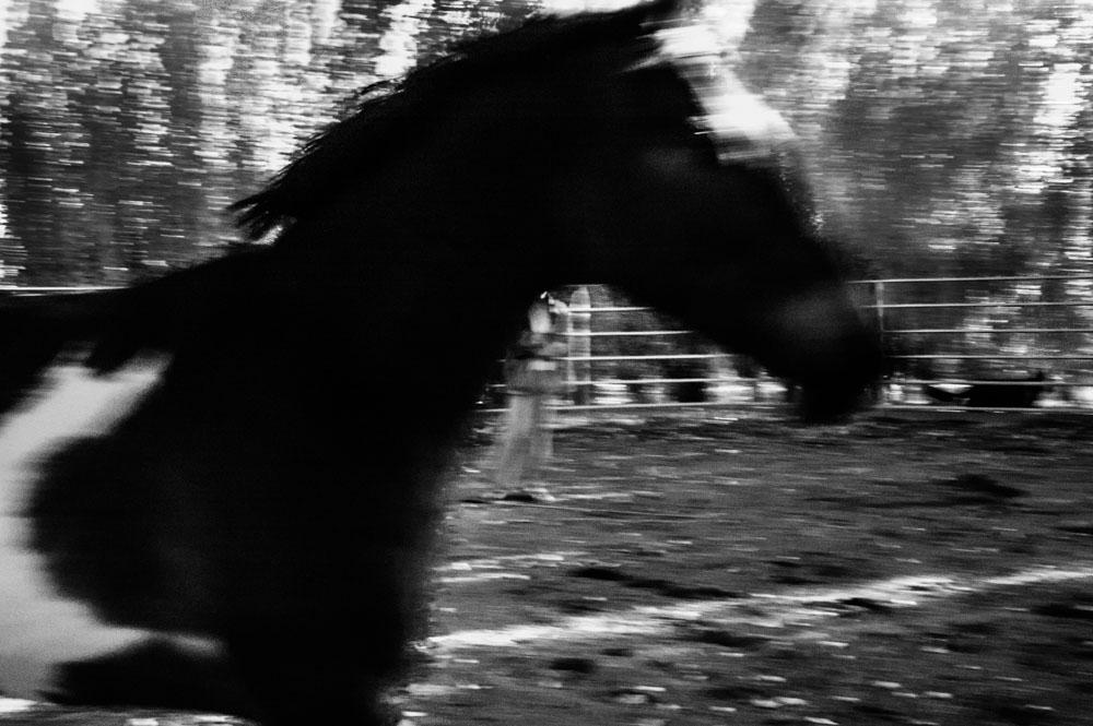 IR Horses-1-2.jpg