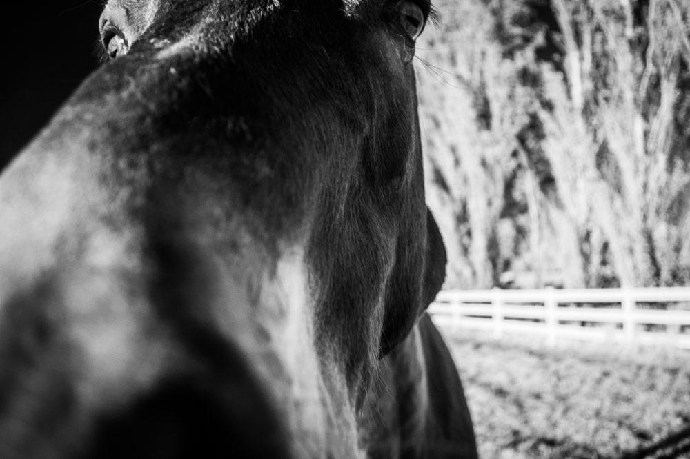 IR Horses-1-3.jpg